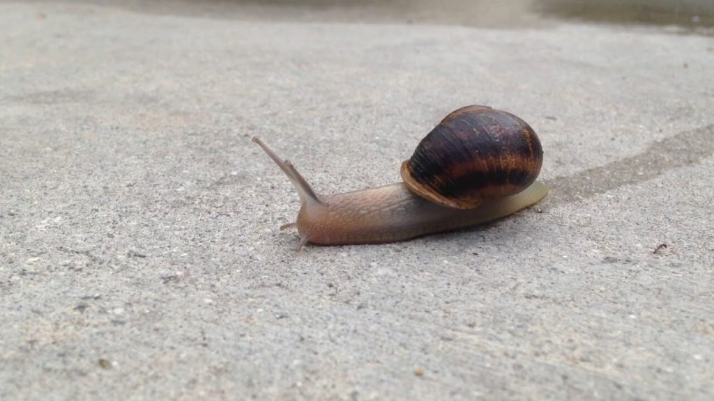 image of a snail on the move representing a slow tableau extract refresh